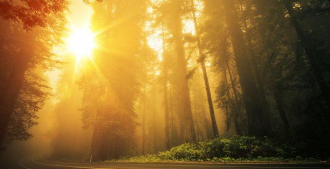 redwood-niebla-puesta-sol_1426-1786